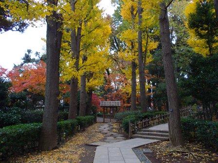 大田黒公園、紅葉