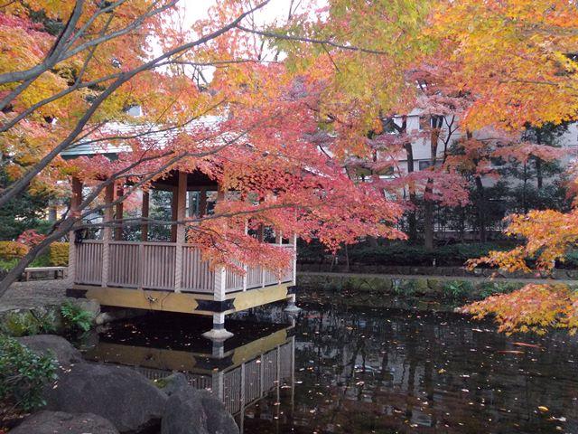 紅葉、東京