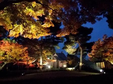 大田黒公園、ライトアップ