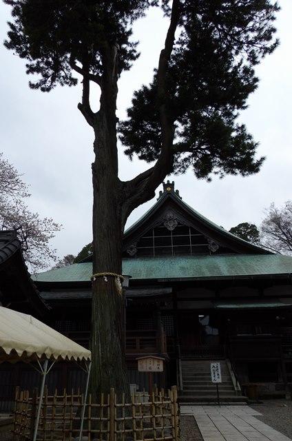 喜多院の槇