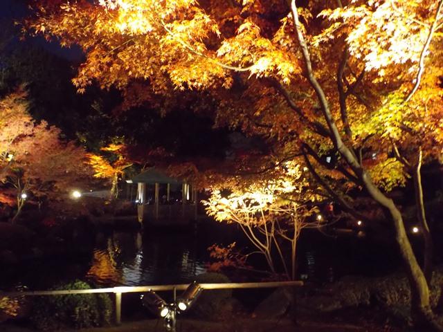 太田黒公園のライトアップ