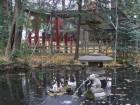 うさぎがいる神社ー浦和の調神社