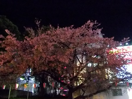上野公園、夜桜