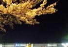 ららぽーと富士見と夜桜