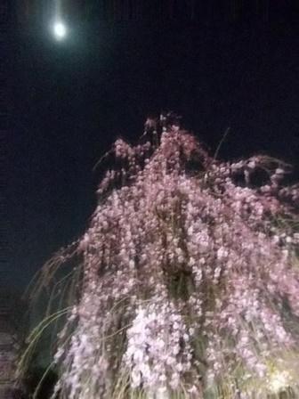 月と枝垂れ桜