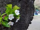 代々木公園の春ーピークを過ぎた花見