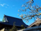鎌倉の旅ー宝戒寺編(2016年2月7日の梅情報も)