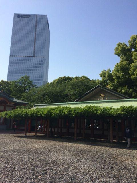 日枝神社藤