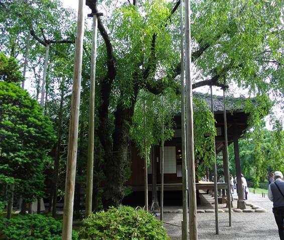 伝法院竹と書院