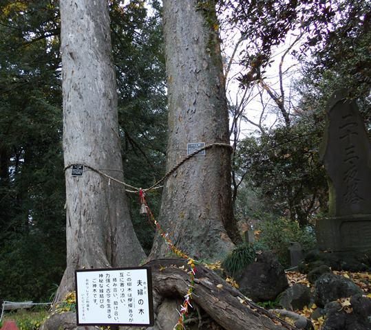 聖天様夫婦の木
