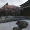 玉蔵院のしだれ桜の状況、2017年3月(浦和)