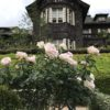 バラのライトアップは5月21日まで旧古河庭園【2017年】