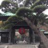 長谷寺(鎌倉から江ノ電乗って)に梅の時期に行ってみた