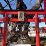今宮神社の御神木