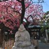 荏原神社は龍神様が上から見守っていた緋寒桜にメジロの季節に