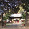 太子堂八幡神社で節分(豆付き)と初午の御朱印(幸せうさぎも見た)
