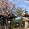 川越の喜多院(春バージョン)