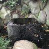 皇居のパワースポットは井戸(行き方も紹介)東御苑の龍穴と言われる場所